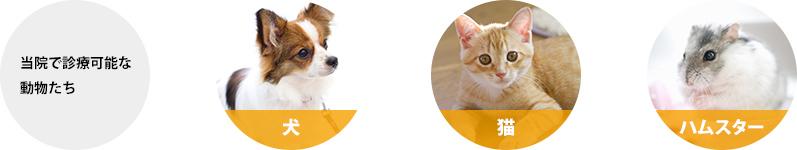 当院で診療可能な動物たち 犬・猫・ウサギ・ハムスター・小鳥